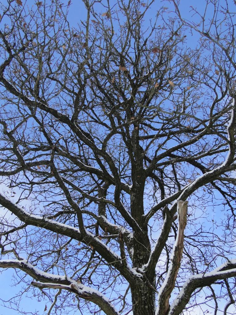 Hinter den kahlen Ästen eines Baumes leuchtet der blaue Winterhimmel (Foto: Tina Bungeroth)
