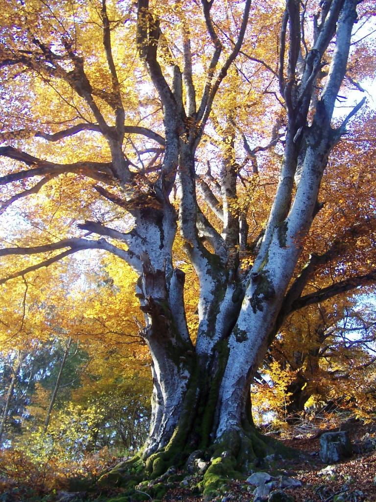 Baum im Herbst mit orangefarbenem Lauf.