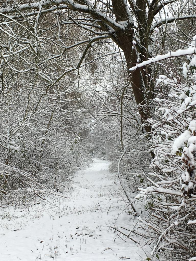 Schnee im Wald (Foto: Tina Bungeroth)