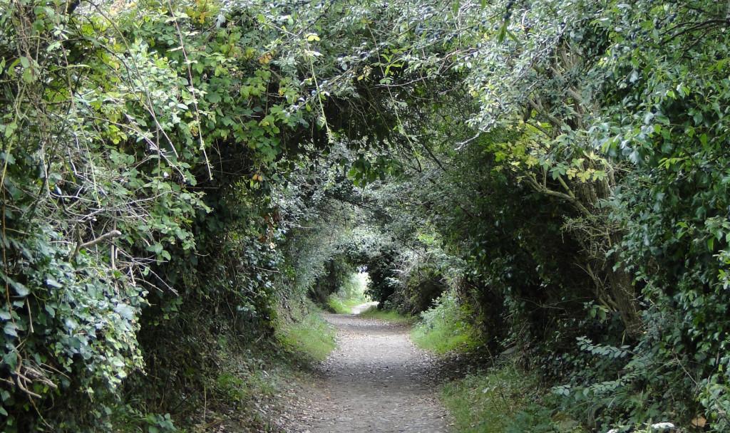 Hohlweg durch Büsche und Bäume