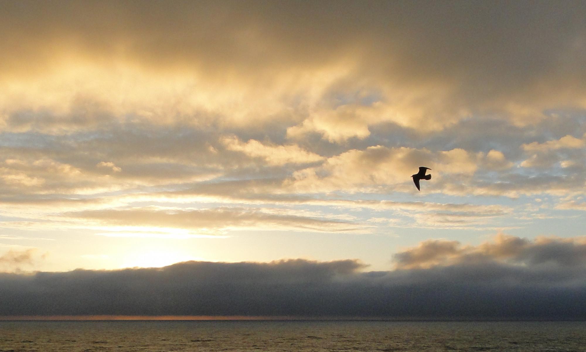 Gedankenflug: Möwe im Flug vor Sonnenuntergang (Foto: Tina Bungeroth)