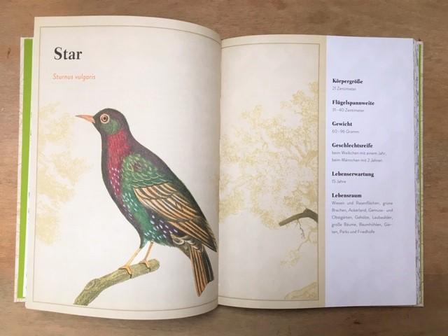 Knesebeck, Buchseite Der Papagei in der Platane, Star