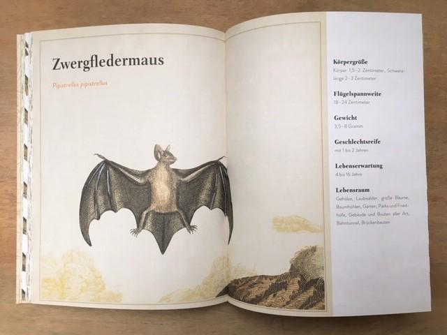 Knesebeck, Buchseite Der Papagei in der Platane, Fledermaus