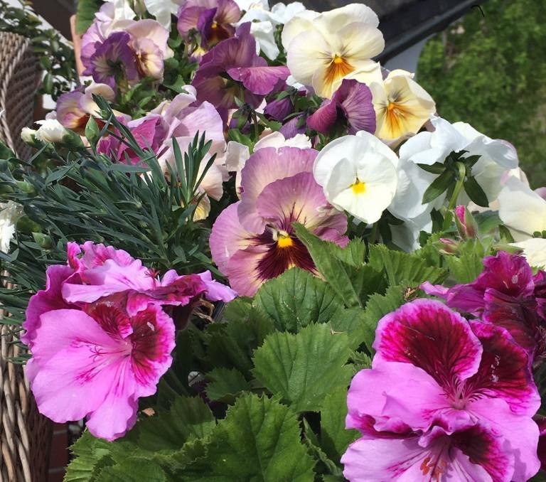 Frühlingsfarben Frühlingsrausch