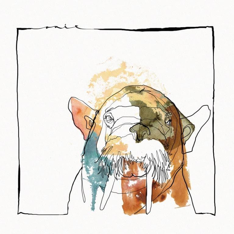Gris Walross
