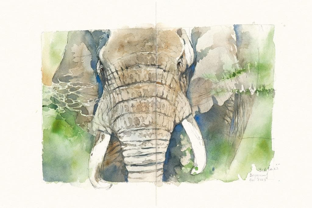 Bodo Meier, Elefant