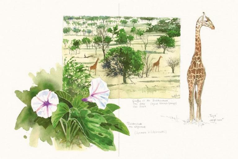Bodo Meier, Giraffe