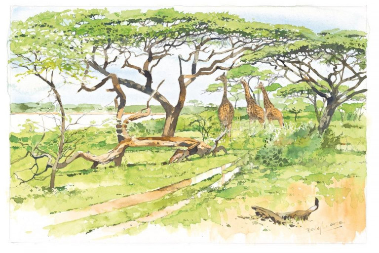 Bodo Meier, Giraffen unter Bäumen