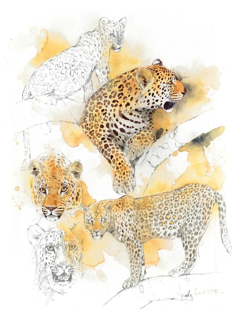 Bodo Meier, Leopard