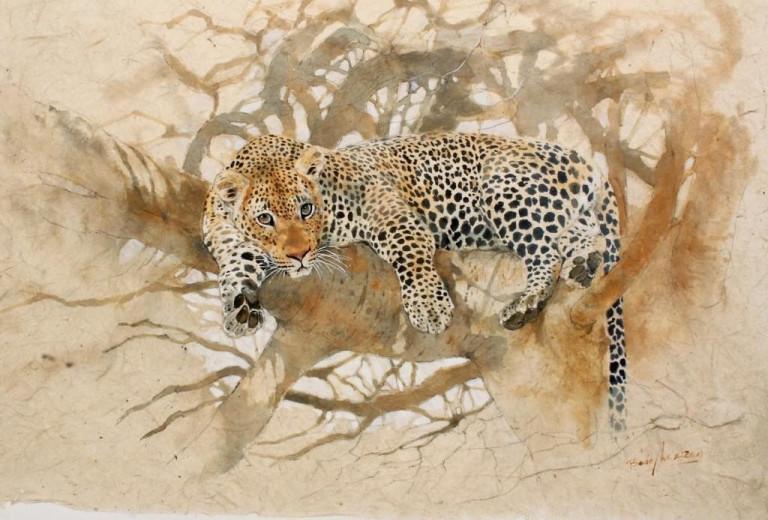 Bodo Meier, Leopard im Baobab,