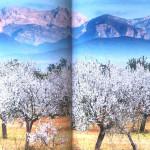 Blütenreise BusseSeewald