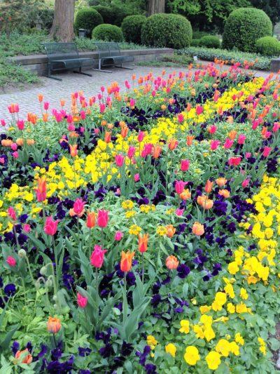 Frühlingsfarben Blumenbeet